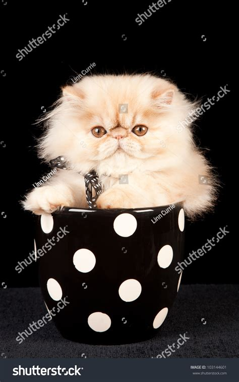 Pot Polka Pot Polkadot Black White kitten with bow sitting in black white polka