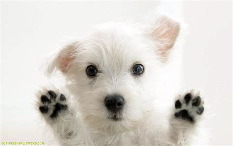 puppy screen screen wallpaper