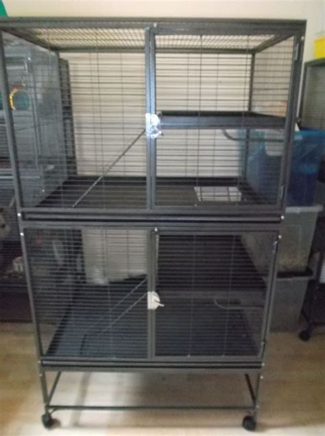 chinchilla homes for sale pets at home pets world
