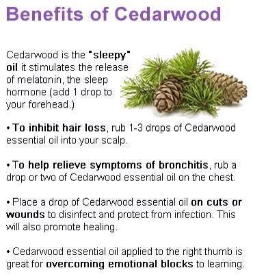 hairgrowth with cedarwood essential oil before and after pics 1000 images about cedar on pinterest trees anxiety and