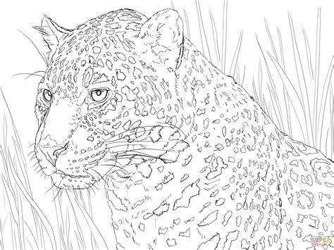 imagenes de bebe jaguar para colorear dibujo de retrato de un jaguar para colorear dibujos