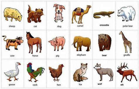 video kartun kebun binatang dan belajar berhitung bahasa 160 nama hewan dalam bahasa inggris dari a z