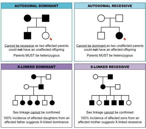 patterns inheritance quiz pedigree charts inheritance cheat sheet genetics