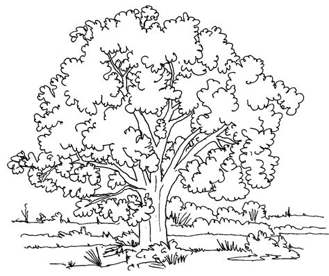 coloring pages nature printable nature coloring pages for kids coloring page for
