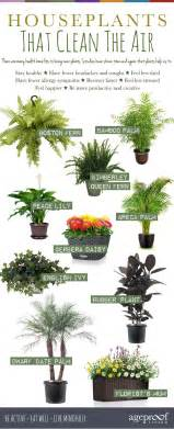 Bedroom Humidifier 10 houseplants that clean the air urban planters