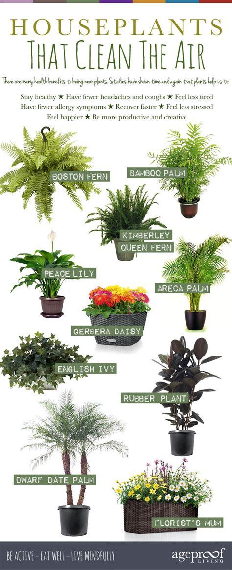 houseplants  clean  air urban planters