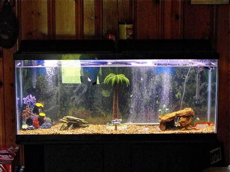 55 gallon fish tank flickr photo sharing