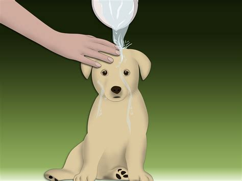 treating allergies in dogs how to treat allergic dermatitis in dogs with pictures wikihow