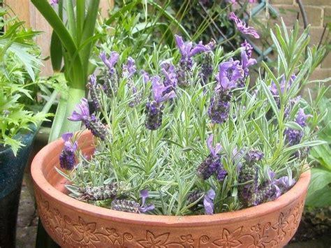 piante da veranda piante sempreverdi da terrazzo piante da terrazzo