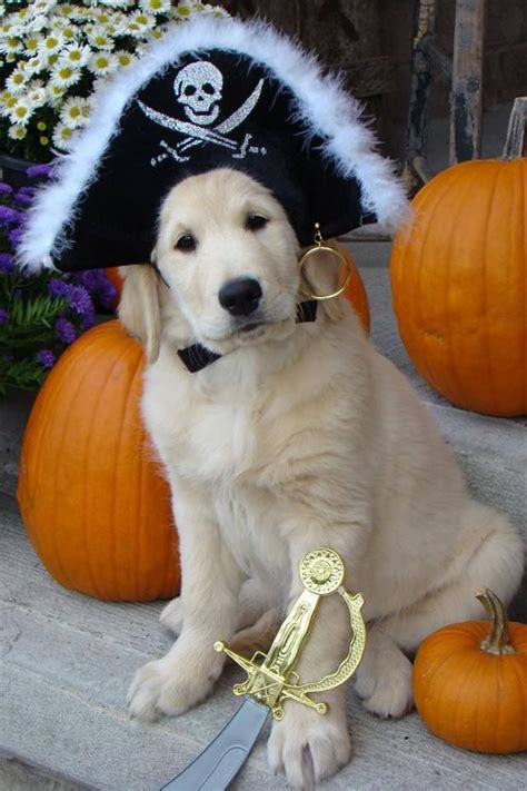 golden retriever costume for baby 17 best images about is golden on the golden and golden rule