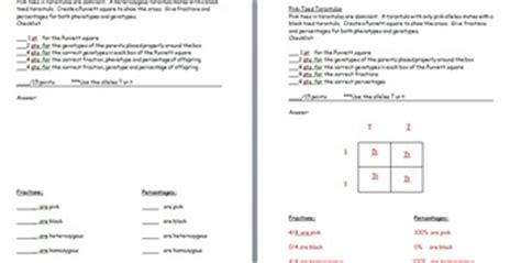 Punnett Square Worksheet 1 Answer Key by Punnett Square Practice Wor By The Science