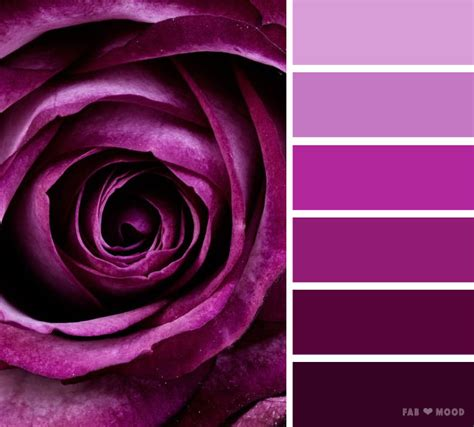 purple rose color scheme shades  dark puprle color palette
