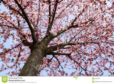 tree timer time tree royalty free stock photo image 4622405
