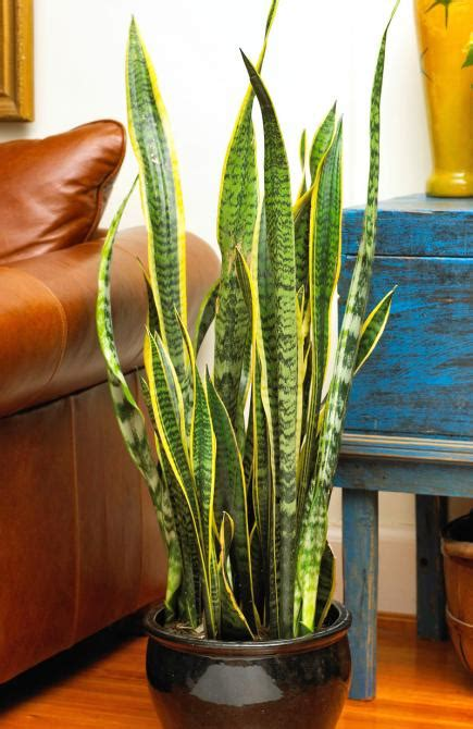 plants for the house 20 easy houseplants you ll midwest living