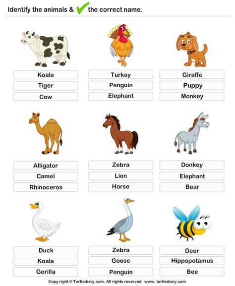 printable animal quiz worksheets learning farm animals worksheet turtle diary