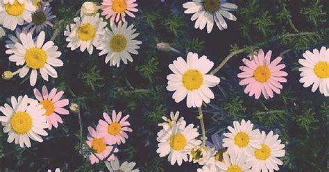 daisy wallpaper pinterest daisy wallpaper tumblr google search vingtage flower