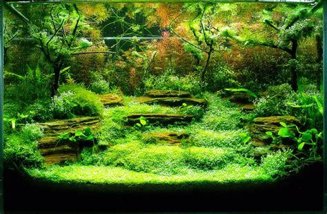 aquascape contest aquascaping international balkan aquascaping contest