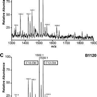 lipid  structures  tohama       pertussis  scientific