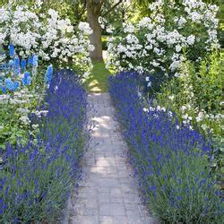 Lavendel Pflege Im Garten 5104 by Lavendel Pflanzen Pflege Und Tipps Mein Sch 246 Ner Garten