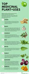Top medicinal plants and their uses herbalism choice
