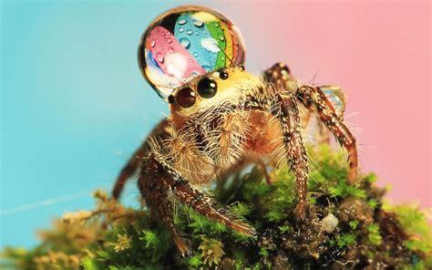Cute Spiders Phil Ebersole S - cute spiders phil ebersole s blog