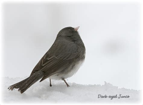maine birds identification images