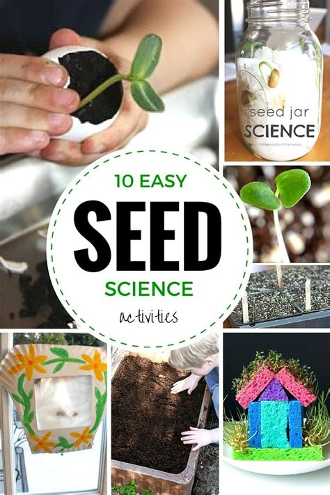 seed experiments  seed science  stem activities  kids