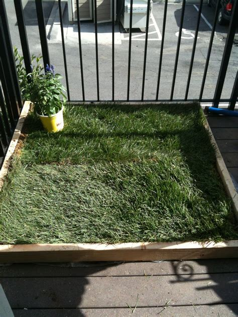 balcony dog bathroom diy dog potty patch for patio i might do this so i don t