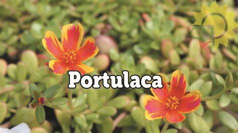 piante da fiore estive perenne e annuali da fiore casanatura vivaio