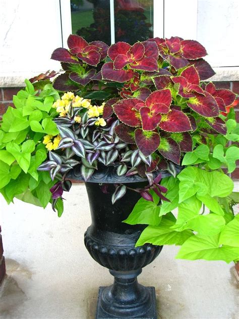 Design For Potted Plants For Shade Ideas 25 Best Ideas About Front Porch Flowers On Pinterest Planting Flowers Porch Plants And