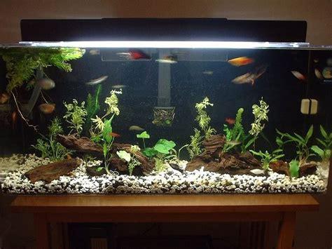 Tropical Aquarium Decorations by Tropical Fish Aquarium Community Tank Fish