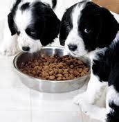 how much to feed a 12 week puppy important do s don ts when feeding your puppy kanineklub