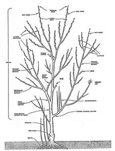 Tree Pruning Nmsu Tree Pruning Techniques