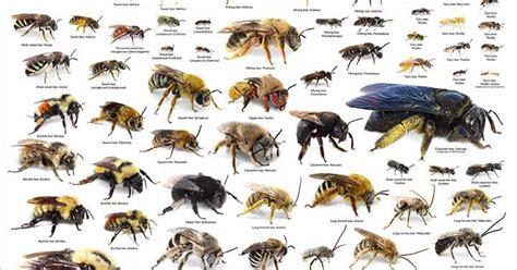 backyard of america bees in your backyard backyard bees poster