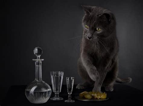 halloween special black cats  photodoto