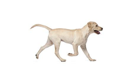 routine care scenthound
