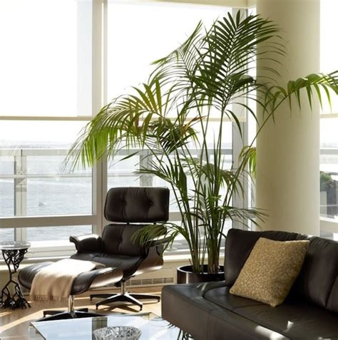 plant decoration in living room 10 beautiful indoor house plants ideas