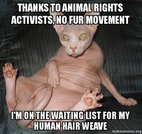Hairless Cat Meme - thanks to animal rights activists no fur movement i m on