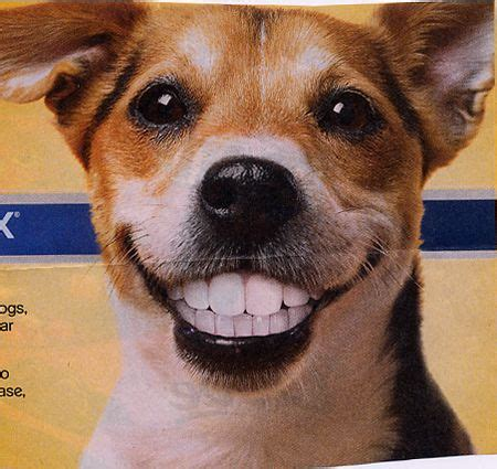 dogs with human teeth sunday newspaper coupons don draper weeps bill peschel