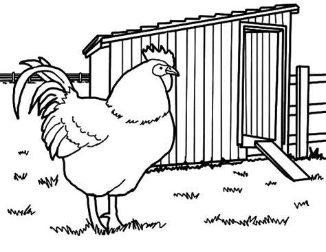 Chicken Coop   NetArt