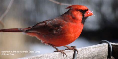 illinois wild birds wild bird co bird feeding watching