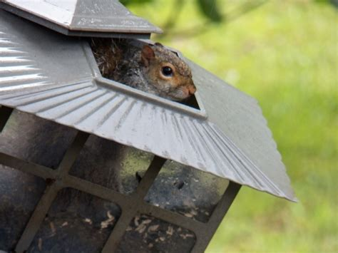 squirrel proof bird feeder quot pick a nut any nut