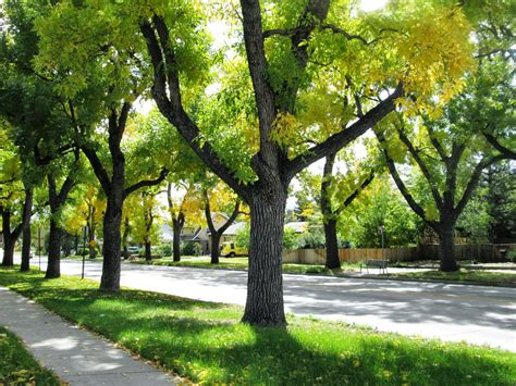 trees denver co horts are your ash trees at risk