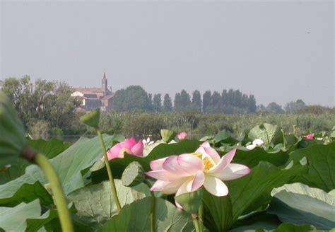 fiori di loto mantova perch 232 mantova 232 unica mantova meraviglia