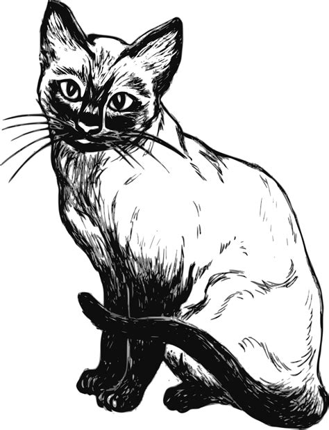 cat black and white cat clip art black and white free