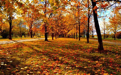 images  fall trees hd hd desktop wallpapers  hd