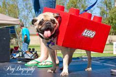 lego pug 1000 images about pet costums on banana costume page and pikachu