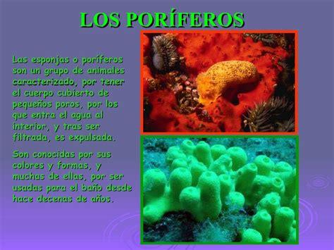 imagenes de animales poriferos los invertebrados marina maria marin y elisa
