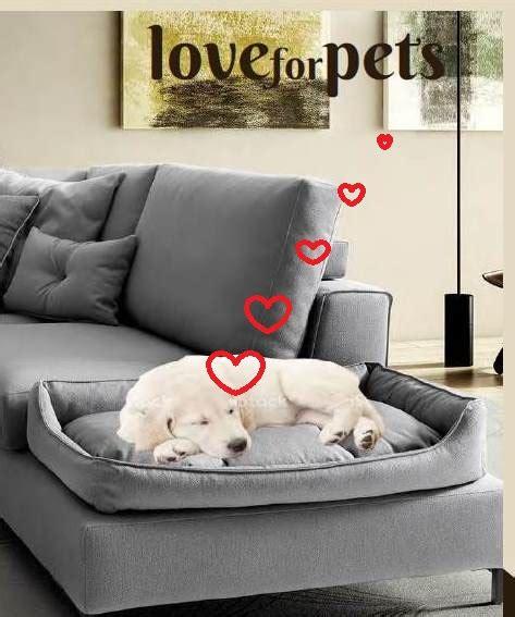 divani per gatti il divano per il e per il gatto