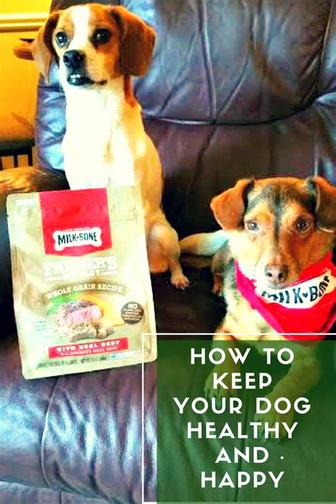 how do you keep your dog off the couch how to keep your dog healthy and happy kicking it with kelly